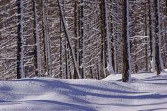 Snow, Winter, Nature, Tree Stock Image