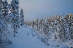 Snow, Winter, Nature, Tree stock photo