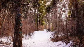 Snow, Winter, Nature, Woodland Royalty Free Stock Photo