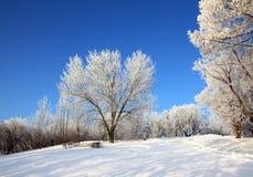 Snow winter park under blue sky Royalty Free Stock Photo