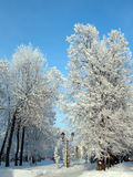 Snow winter park under blue sky Royalty Free Stock Photos