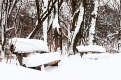 Snow winter in a park Royalty Free Stock Photo