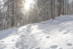 Snow, Winter, Path, Tree stock images