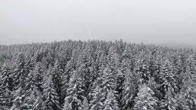 Snow winter season. trees forest woods. beautiful nature. fly over. aerial view. stock footage