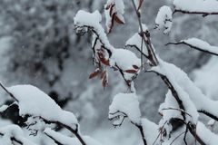 Snow. Winter time, snow and trees. They are wonderful Royalty Free Stock Image