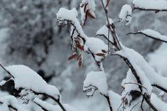 Snow Royalty Free Stock Image