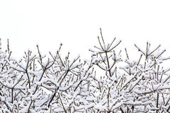 Snow on Winter Tree Royalty Free Stock Photo