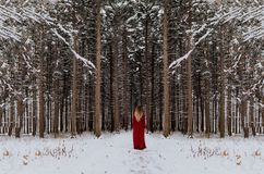 Snow, Winter, Tree, Freezing Royalty Free Stock Images