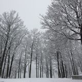 Snow, Winter, Tree, Frost Royalty Free Stock Images