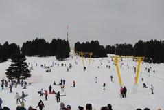 Snow, Winter, Tree, Geological Phenomenon royalty free stock image