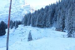 Snow, Winter, Tree, Mountain Range royalty free stock photography