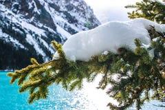 Snow, Winter, Tree, Pine Family Stock Photography