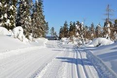 Snow, Winter, Tree, Piste royalty free stock photos