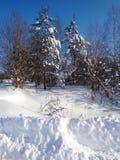 Snow, Winter, Tree, Sky stock images