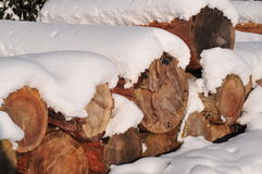 Snow winter tree trunks Royalty Free Stock Photography