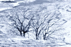 Snow winter trees Stock Image