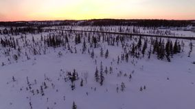 Snow winter trees on sunset. woods forest landscape. beautiful nature. aerial view stock video