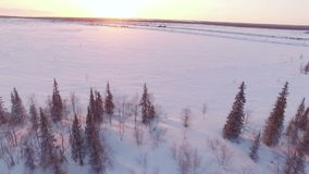 Snow winter trees on sunset. woods forest landscape. beautiful nature. aerial view stock video footage