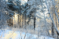 Snow winter wood Stock Photography