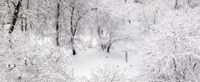 Snow on a wood Stock Photos