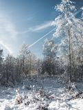 the snow wood in sunny day /frosty day in the snow forest royalty free stock photos