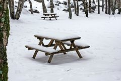 Snow on wooden benches Stock Images
