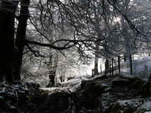 Snow and woodland on Exmoor. A sunday walk in a dusting of snow on a woodland track on Exmoor Stock Photography