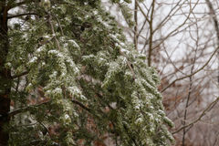 Snow in the Woods Royalty Free Stock Photos