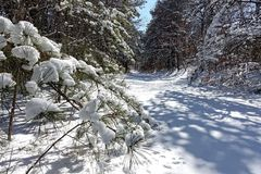 Snow in the woods. Snow covered trees in the park Lakewood New Jersey stock image