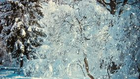 Snow in the woods forest in winter. Snow trees branches daytime. Christmas wintery new year fairy scenery forest landscape backdrop. Cinemagraph seamless loop stock video footage