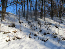 Snow in The Woods. This is snow out in the country in a woods one winter day here in Wisconsin Royalty Free Stock Photos