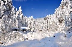 Snow World Royalty Free Stock Image