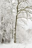 Snow wrapped tree. In december royalty free stock photo