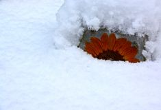 SNOW AND YARD ART BACKGROUND. A concrete, sunflower decoration for the garden buried in the snow Royalty Free Stock Photography