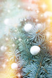 Snowball on christmas tree Royalty Free Stock Images