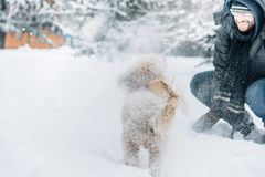 Snowball fight fun with pet and his owner in the snow. Winter holiday emotion. Cute puddle dog and man playing and running in the forest. Film filter image stock photo