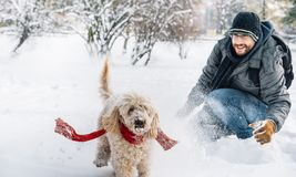 Snowball fight fun with pet and his owner in the snow. Winter holiday emotion. Cute puddle dog and man playing and running in the forest. Film filter image stock photos