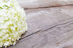 Snowball hydrangea Stock Image