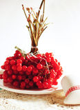 Snowball red berries Royalty Free Stock Photos