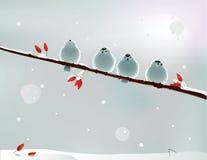snowballs Lizenzfreie Stockbilder