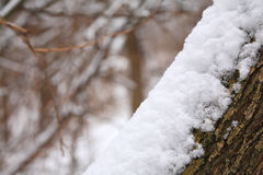 Snowbank on tree trunk Royalty Free Stock Images