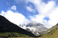 Snowbery in Tibet Stock Photos