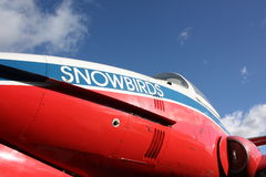 snowbird stockbild