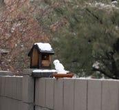 Snowbird on the Fence beside the Bird House. A snow bird sits on the fence beside his bird house in Tucson AZ. This snow bird didn`t stay very long stock photography