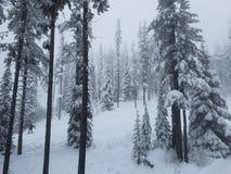 Snowboard attraverso la foresta innevata Fotografie Stock