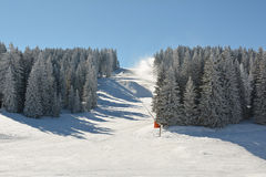 Snowboard and ski slope through fir forest Stock Photos