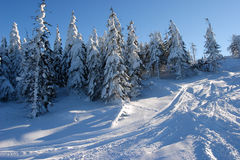 Snowboard tracks on the slope. Winter in the Silesian Beskids. Snowboard tracks on the slopes of Skrzyczne mountain close to the town of Szczyrk. Southern Poland Royalty Free Stock Photography