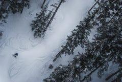Snowboarder που πηγαίνει κάτω μεταξύ των δέντρων του συριστήρα Στοκ φωτογραφία με δικαίωμα ελεύθερης χρήσης