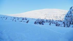 Snowboarder катается на коньках на покрытом снег наклоне среди деревьев акции видеоматериалы