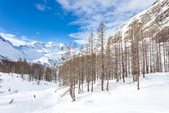 Snowboarders skiing in a snowy mountain forest Stock Images
